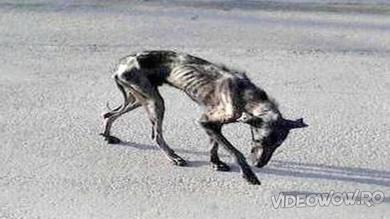 Au luat acest câine de pe stradă în casa lor pentru a MURII liniştit şi iubit, dar Dumnezeu a avut alte planuri pentru el! După ce a simţit iubirea şi afecţiunea care l-au înconjurat... WOW, un adevărat miracol!
