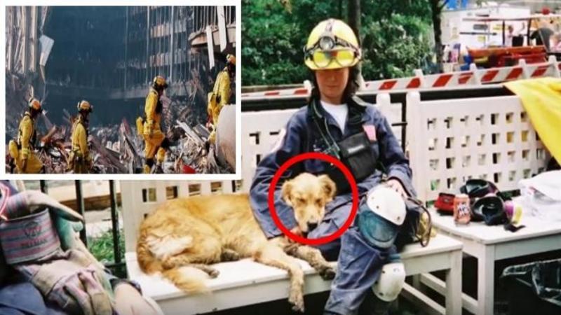 Este ultimul CAINE rămas în viaţă care a ajutat la găsirea supravieţuitorilor de la marea tragedie din 11 septembrie 2001 şi astăzi este ziua lui de naştere! Iată ce au pregătit aceşti oameni pentru micuţul EROU... Emoţionant