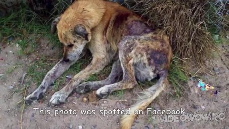 Cineva a făcut o POZA acestui câine bolnav şi a postat-o pe internet: Ce s-a întâmplat cu bietul suflet după câteva săptămâni... Dumnezeule mare, mi-au dat lacrimile de fericire