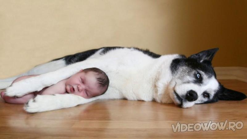 Si-au lăsat micuţul dormind în casă împreună cu câinele familie: Uite ce au găsit atunci când s-au întors... De necrezut aceste imagini!