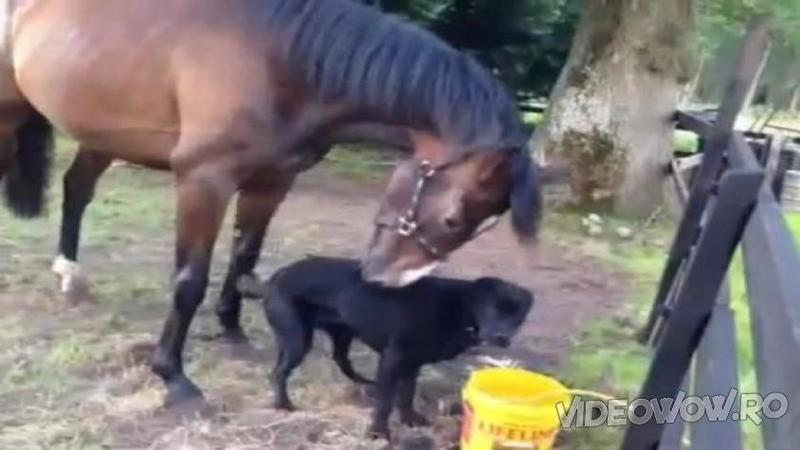 Au decis să ADOPTE un câine fără să îşi dea seama de ce fac, dar când micuţul a fost adus acasă şi s-a întâlnit pentru prima dată cu noul lui partener de joacă... FANTASTIC!
