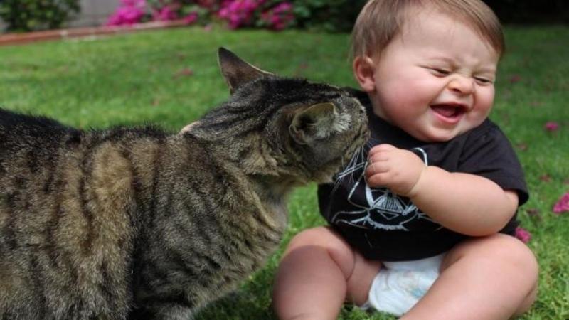Esti sigur că doar câinii iubesc bebeluşii? Uită-te la aceste pisicuţe care sunt topite după copii mici şi drăgălaşi, iar mie unu mi-a umplut inima de bucurie