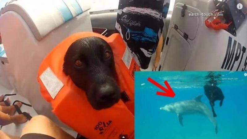 Si-a luat câinele cu el în barcă pentru a nu îl lăsa pe plajă: Ce reacţie a avut acesta când a văzut DELFINII în apă nu mi-a venit să cred... m-a lăsat fără cuvinte!