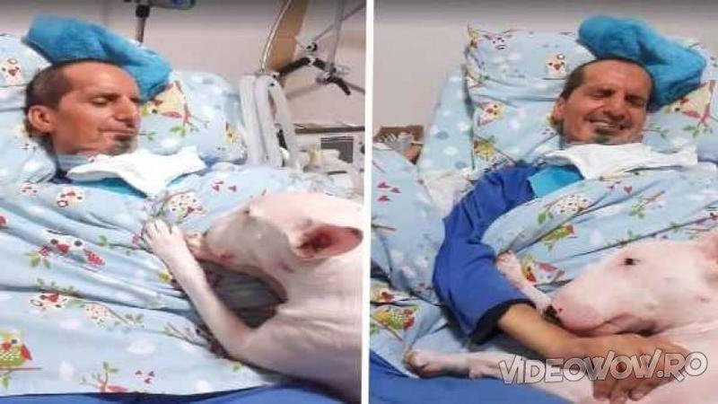 Stăpânul lui era grav BOLNAV pe patul de spital şi când rudele intră în cameră pentru a vedea ce face, nu le-a venit să creadă cum îşi găsesc câinele familiei... cu adevărat emoţionant!
