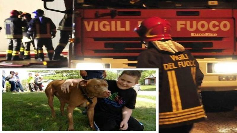 Când pompierii au ajuns la CASA în flăcări nici prin cap nu le-a trecut că aveau să găsească o asemenea privelişte de necrezut! Când şi-au dat seama ce a făcut câinele familiei pentru copii aflaţi în casa care ardea...